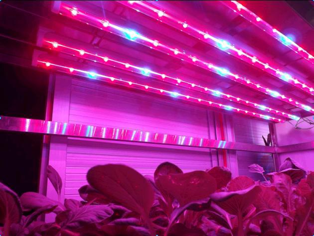 Deep Water Culture Commercial Hydroponics Systems Vertical ,T8 LED Grow Tube Light ,4Feet,Full Spectrum 400-840nm,Factory Price