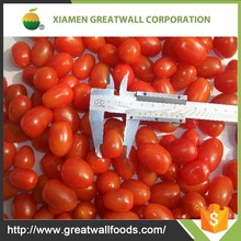 IQF Frozen delicious fresh cherry tomatoes in Competitive price in bulk