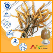 the Best King Of Cordyceps