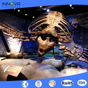 Innova-Museum Animal Fossil Life Size Artificial Dinosaurs Skeleton For Sale