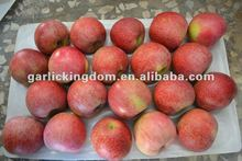 new crop unbagged Qinguan Apple from Shaanxi