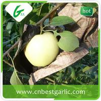 Price for fresh golden delicious apple fruit brand
