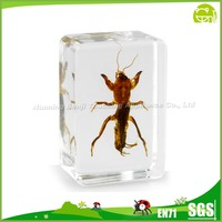 New-type Embedded Real Insect Acrylic Crystal Insect Specimen Amber Biology for Educational Aids