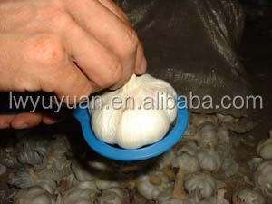 Hot selling wholesale Chinese white garlic in best quality and best offer