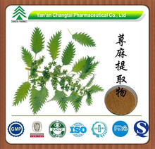 GMP Factory Supply 100% Pure Natural Nettle Herb P.E. Powder