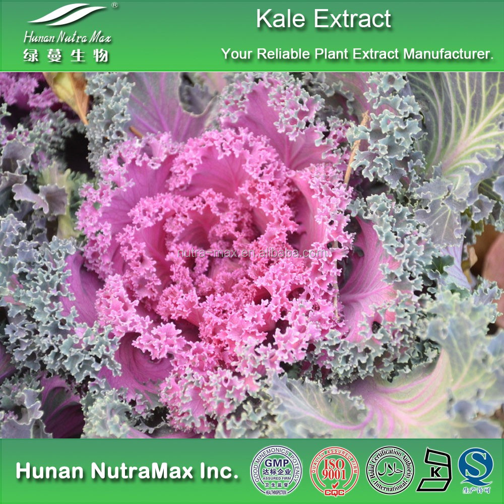 100% Pure Curly Kale Extract,Curly Kale Extract Powder,Curly Kale P.E.4:1~20:1