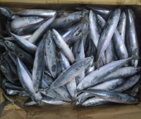 Blue mackerel king fish with nutrition for supermarket