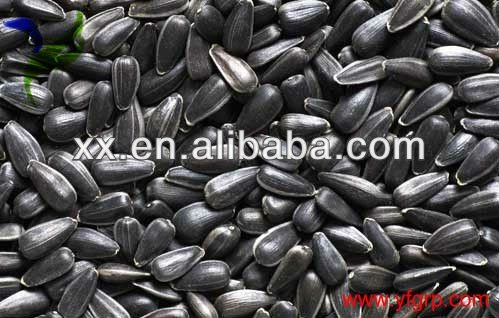 cheap Chinese 5009 Sunflower Seeds for birds