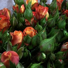 Chinese Style Fresh Flowers With 0.8~1.2KG/Bundle Dutch Rose Golden Color Spray Rose Bubble Mania From Focus/Kunming