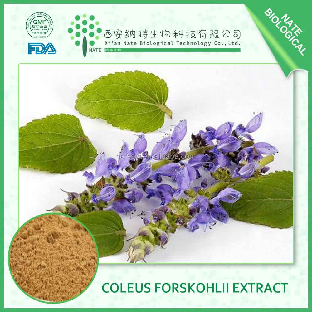 GMP Manufacturer Supply High Quality Coleus Forskohlii Extract