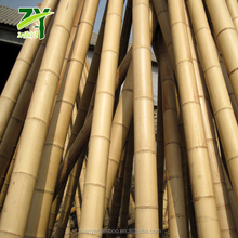 BEST SELLING ZY-1010 Large Moso Bamboo Big Diameter Bamboo Raw Bamboo Poles for Construction !