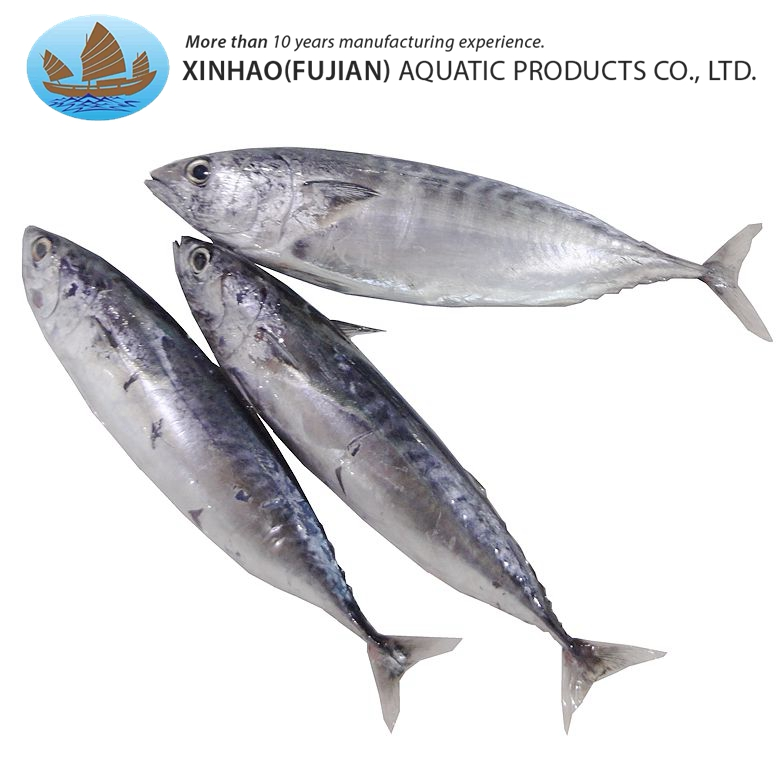 Top grade frozen whole round bonito bullet tuna fish on sale