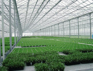 agricultural 100% virgin ldpe 3% uv greenhouse film,blue light diffusion plastic film for flowers