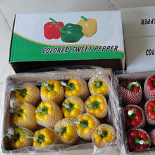 fresh green yellow red color capsicum