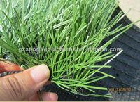 FIFA Artificial turf/artificial grass lawn/Fake grass for sport