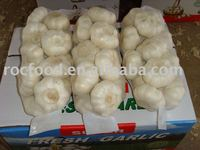 2011 crop Pure white garlic 5.5cm