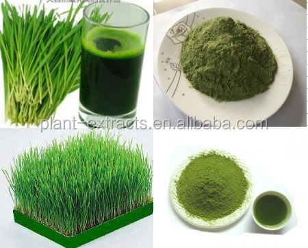 Hordeum vulgare/barley malt extract powder/barley grass powder