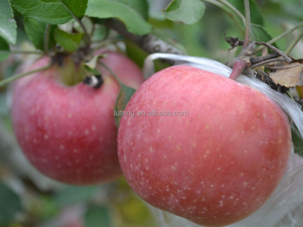 New crop name of imported fruits