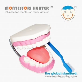 Montessori Mouth model for school materials