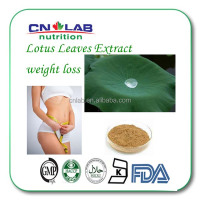Natural 2% nuciferine lotus leaf extract powder ,HACCP Kosher FDA lotus leaf extract,flavones