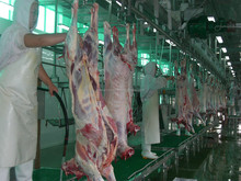 cattel sheep and goat slaughter house