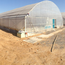 structure height 4.3m - 6.5m commercial vegetable greenhouse for sale