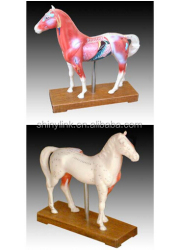 Pet Models - Cat, Dog & Horse