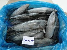 ZhengYuan aquatic sea Frozen Bonito Fish