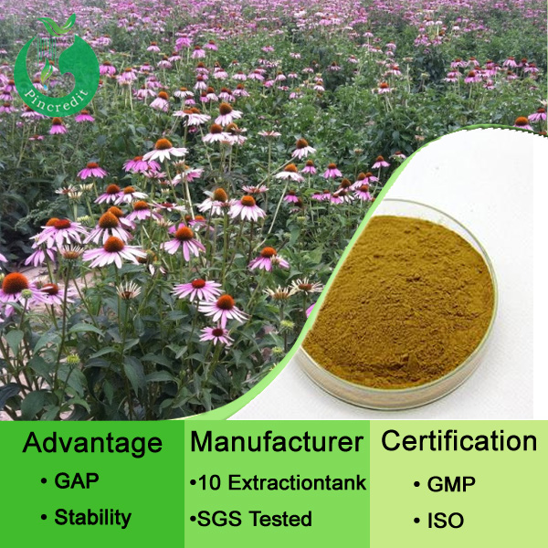 High Quality Echinacea Purpurea Extract Powder