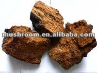 chaga extract powder; chaga mushroom extract