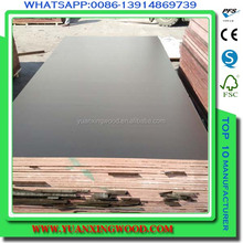china alibaba uae market formwork plywood can compete with korindo film faced plywood