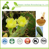 Plant Cacti Cactus Prickly Pear Extract with High Quality
