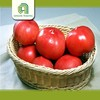 farm fresh tomatoes for sale wholesale tomatoes with great price