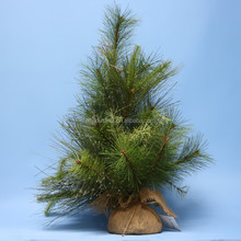 Display Christmas Trees Table Decorations /Artifical Christmas Decoration Tree
