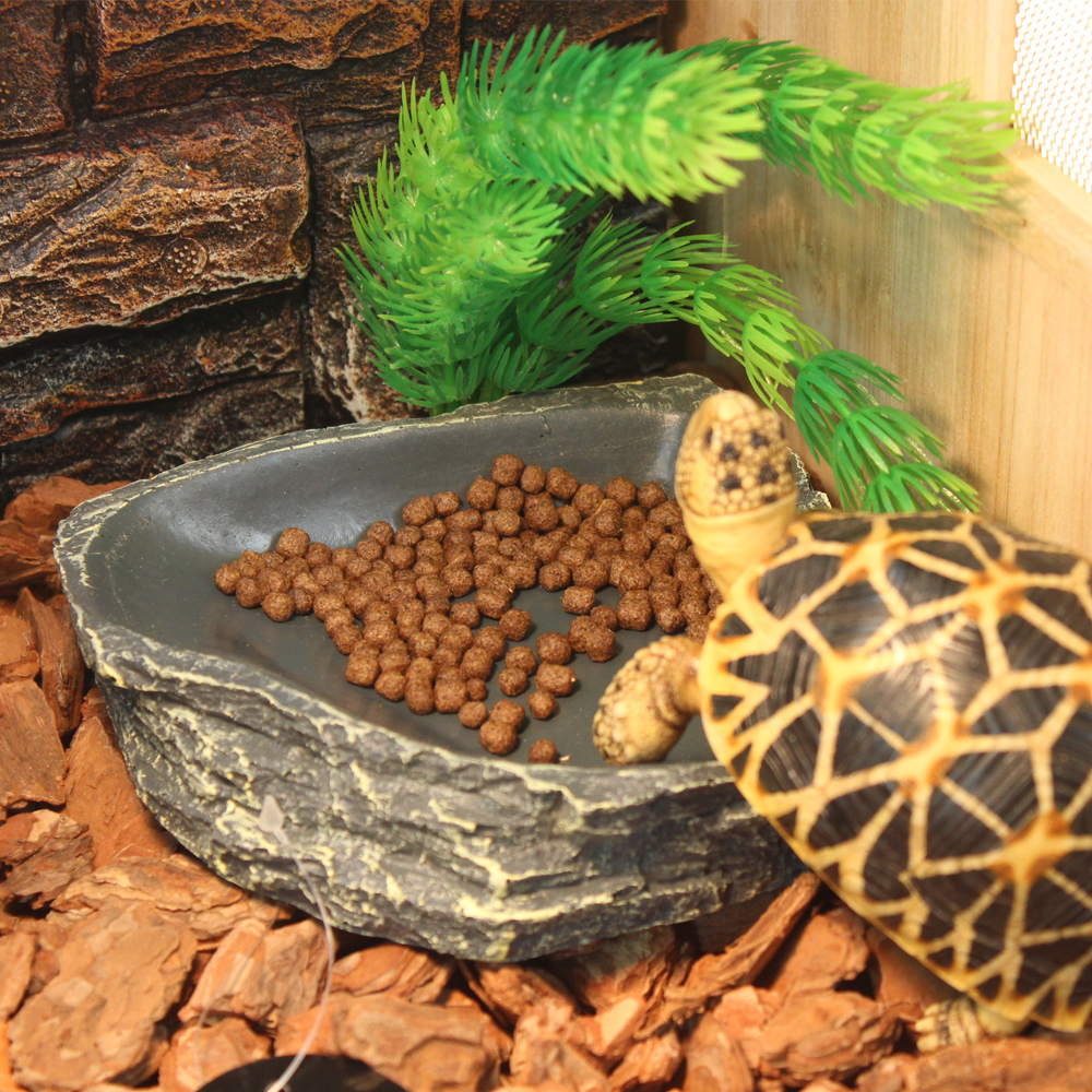 Nomo resin reptile pet feeder bowl & water feeder