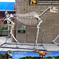 My-dino artificial animal horse skeleton model for sale