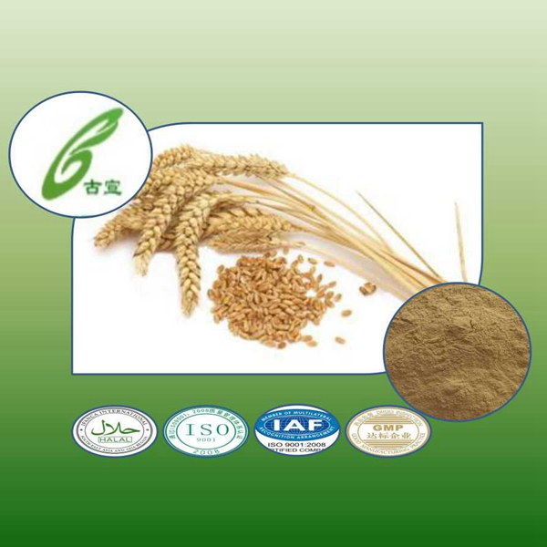 Pure Natural Barley Malt Extract Plant Extract