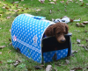 Blue factory many design pet travel bag for dog hand and should carry bag pet