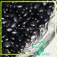 2013 Crop Dried Black Mapte Crop/ Fermented Black Kidney Beans Wholesale Kacang Hitam