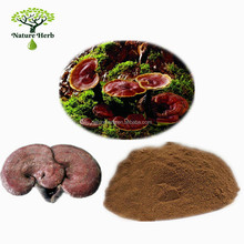 Healthcare Product Lucid Ganoderma Extract Powder