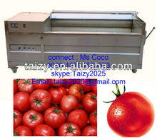 potato washing and peeling machine /tomato washing machine / carrot washing machine 0086-18703683073