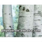 high quality birch bark extract