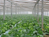 high quality cheap price 200mic tunnel plastic pe greenhouse film for agriculture landscape