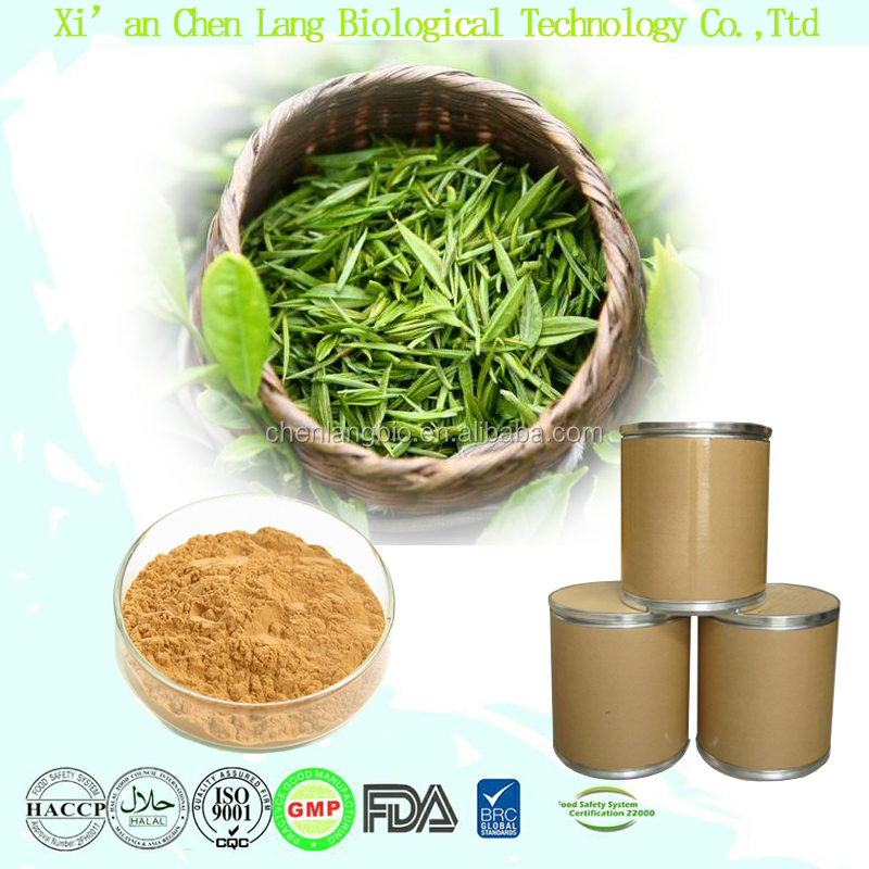 High Quality Mint Green Tea Extract Powder EGCG Tea Polyphenol 50%~98%