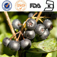 Ribes nigrum,Black Currant seed Extract,25% Anthocyanidins