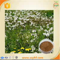 Top quality flavonoid 4% from dandelion extract, dandelion root extract