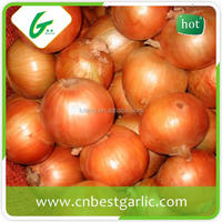 Fresh cheap onion prices in india