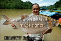 EMPURAU Unforgettable Fish from Sarawak
