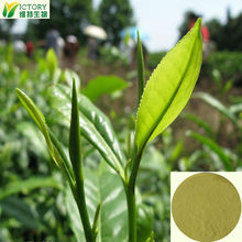 2014 wholesale loss weight green tea leaf extract/tea polyphenol capsule