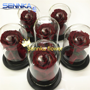 Single Giant Immortal Rose in Glass Dome Preserved Flowers Stabilized for Gift